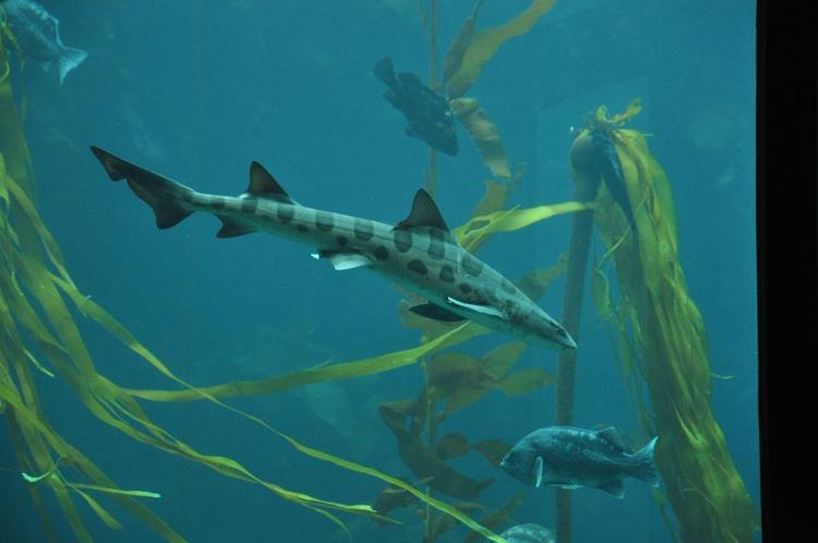 Aquarium @ Monterey 2-13-12 088